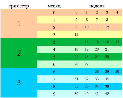 beremennost-nedeljam-mesjacam-trimestram_5_1.jpg